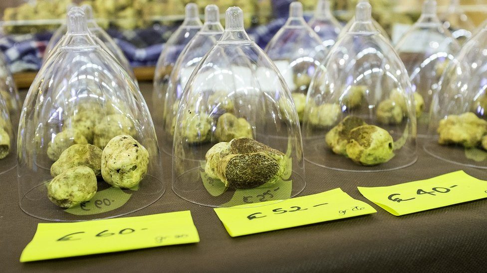 White truffles exposition at the International Fair of the Truffle of Alba (Cuneo Province, Piedmont, Italy).