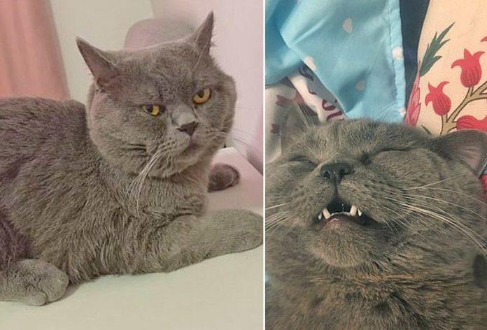 """แมวหนุ่ม """"กลัดมัน"""""""