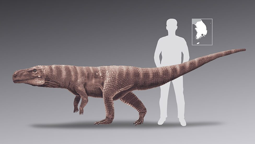 Batrachopus size comparison
