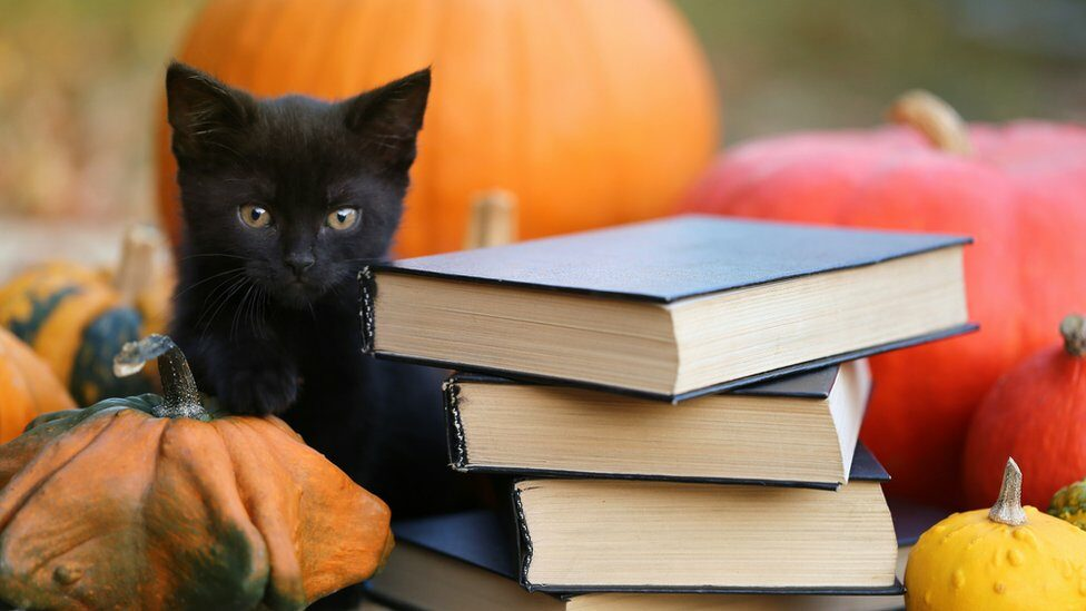black-kitten-surrounded-by-pumpkins