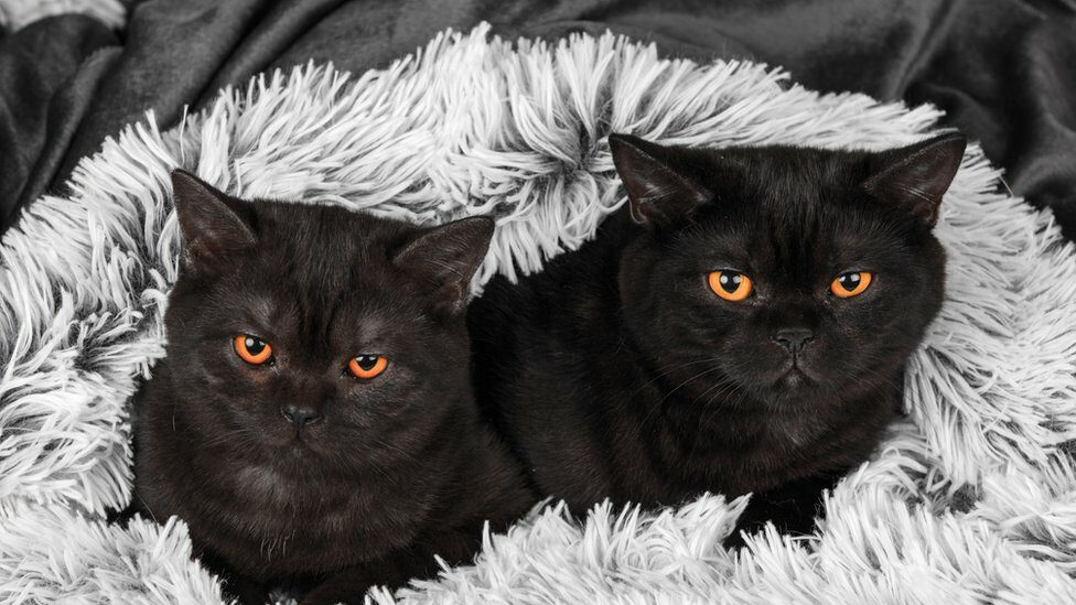 two black cats on a rug