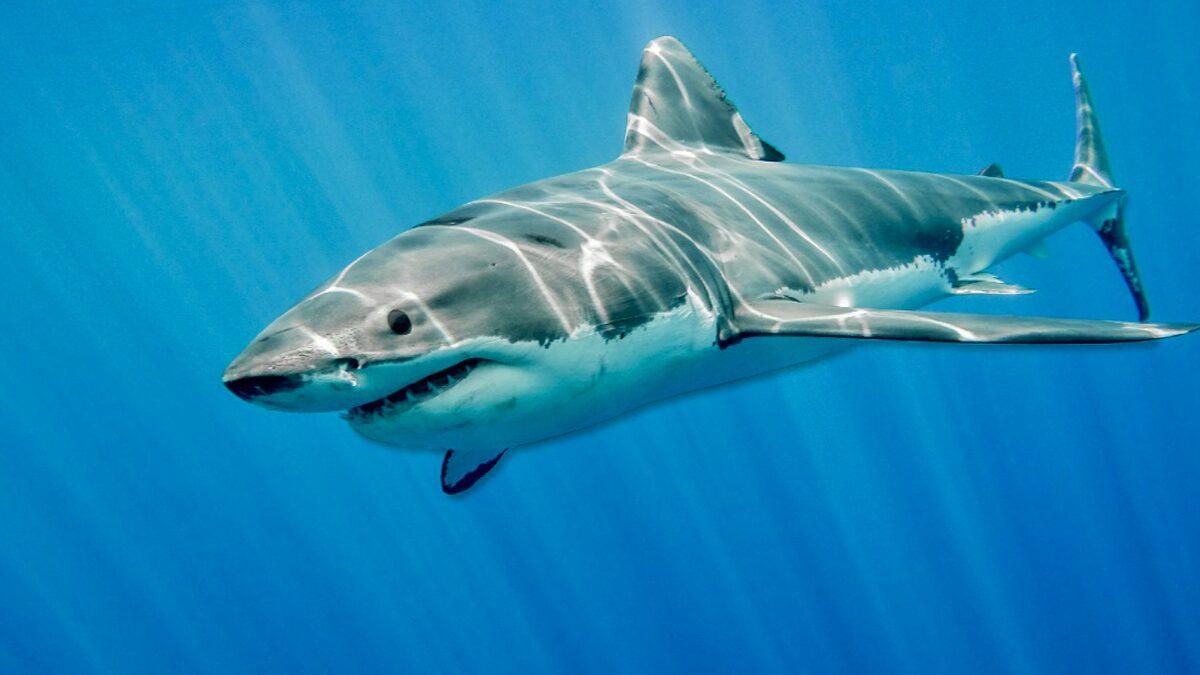 """ชายเมาถูก """"ฉลามกัด"""" ระหว่างฉี่ในทะเล ทนพิษแผลเหวอะไม่ไหว-สิ้นใจสลด (คลิป)"""