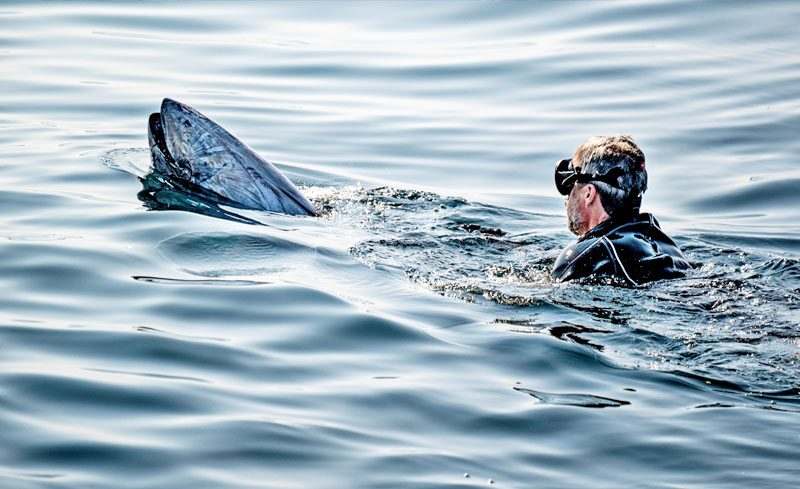 ลงทะเลอนุรักษ์ทูน่า ชาวเน็ตแห่ชม-ยกย่องทรงงานหนัก