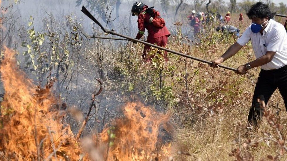 People fighting a wildfire